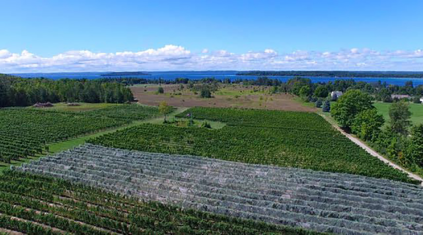 The winery has more than 20 acres of vines and bottles varieties such as Chardonnay, riesling and pinot noir. Photo courtesy of West Bay Beach.